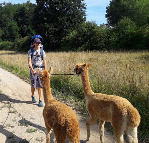 HipHipHallertau: Alpakawanderung in der Hallertau