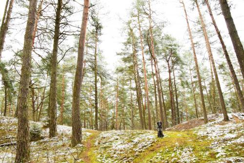 Ein schmaler Pfad führt vom Parkplatz in den Kiefernwald. Wo ist denn hier der Sand?
