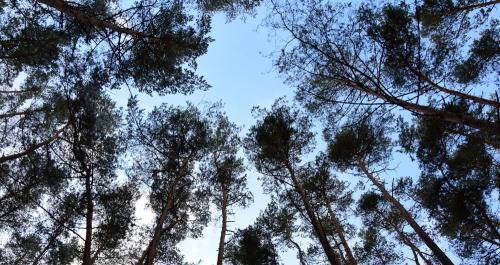 Die lichten Baumkronen lassen den Himmel super schön aussehen.