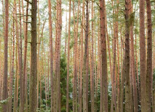 Tolle Farbkontraste sind auch an den Bäumen zu sehen