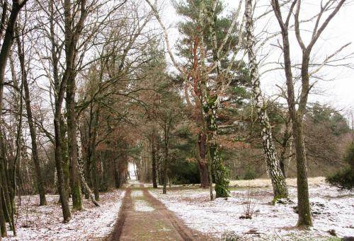 viehweide bäume