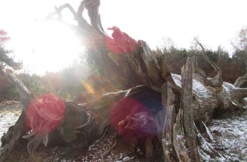 viehweide totholz