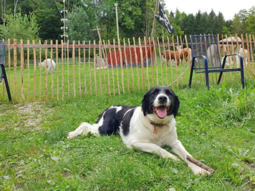 Hund Hilde ist der Freund von jedem - ob Tier ob Mensch