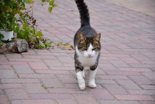 Katzenbewohner des Mayerhofer Begegnungshofs